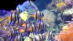 Тихоокеанский коралловый риф онлайн